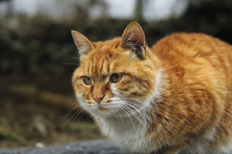 Download Cat stock photo. Image of asia, closeup, kitten, playing - 4633464