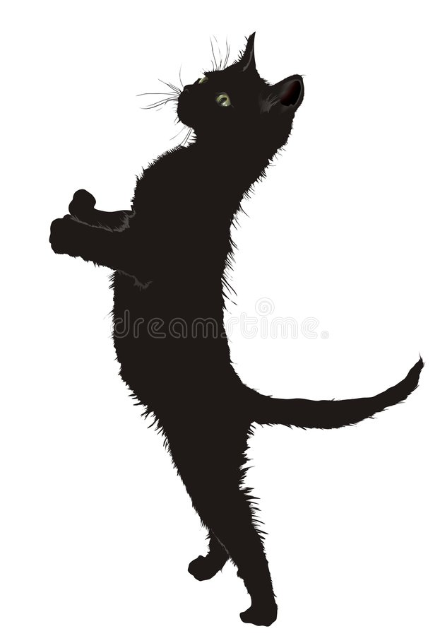A Cat royalty free stock photo