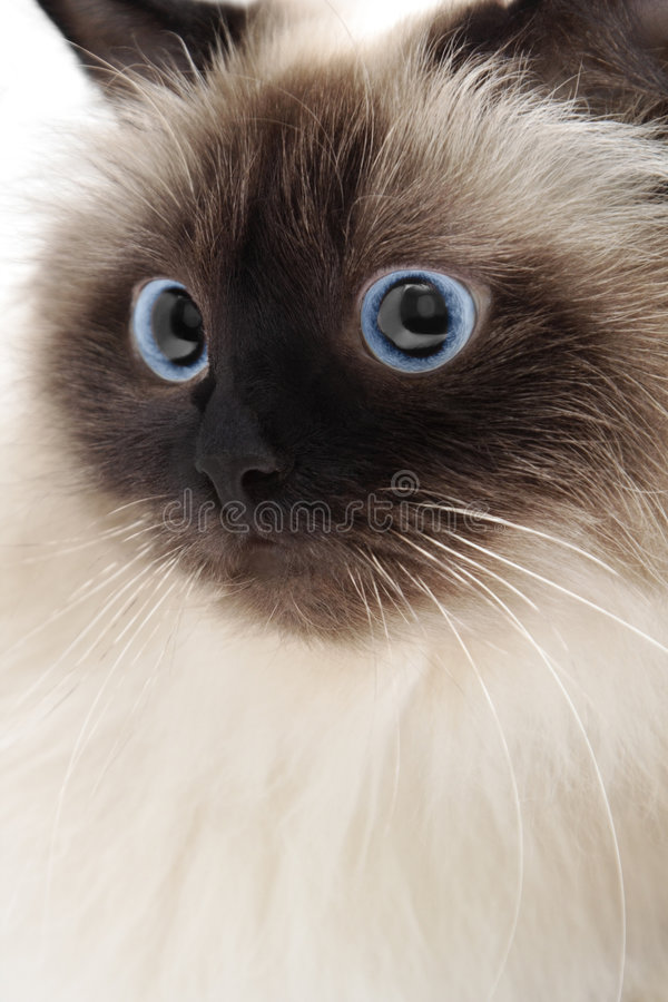 Free Cat Royalty Free Stock Images - 4668619