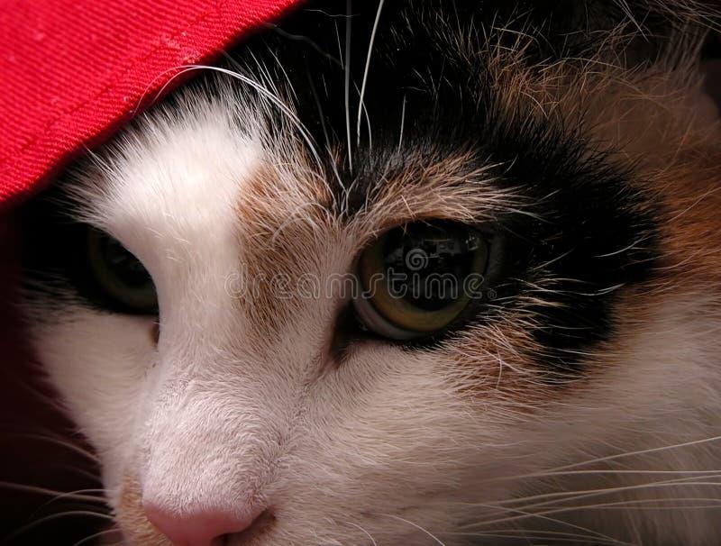 Download Cat stock photo. Image of vision, innocence, wonder, dream - 51430