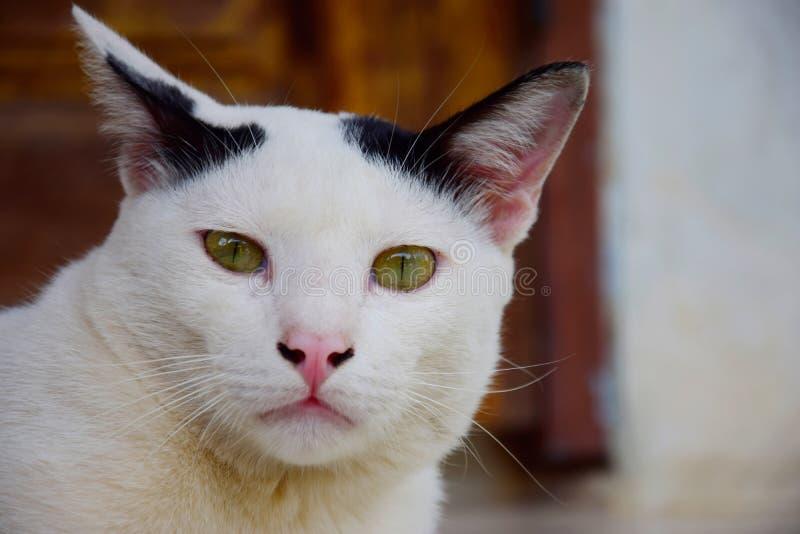Download Cat_1 stock afbeelding. Afbeelding bestaande uit huisdieren - 54077239