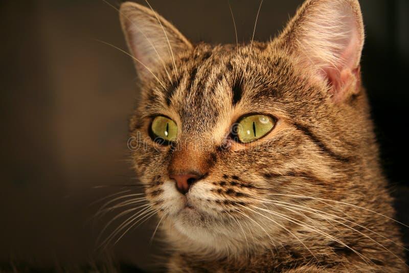 Cat_1 zdjęcia stock