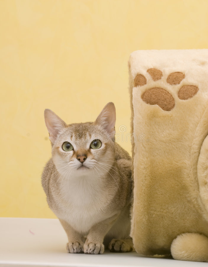 Download Cat Royalty Free Stock Images - Image: 7607549