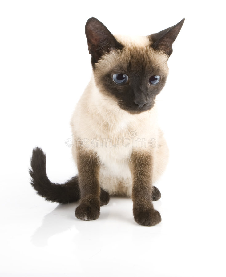 The cat stock photography