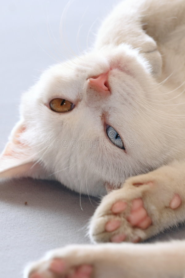 Free Cat Royalty Free Stock Photography - 7774287