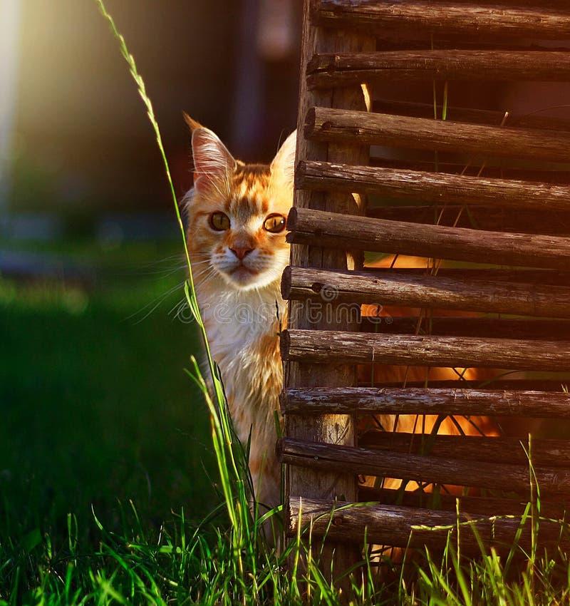 Free Cat Stock Photography - 82609432