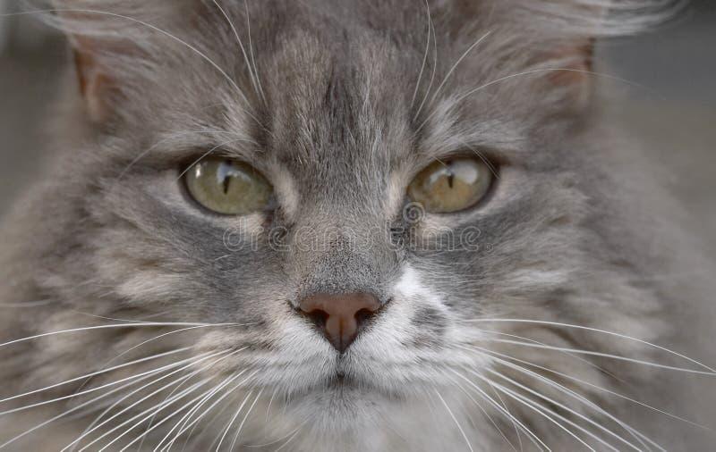 CAT Lizenzfreies Stockbild