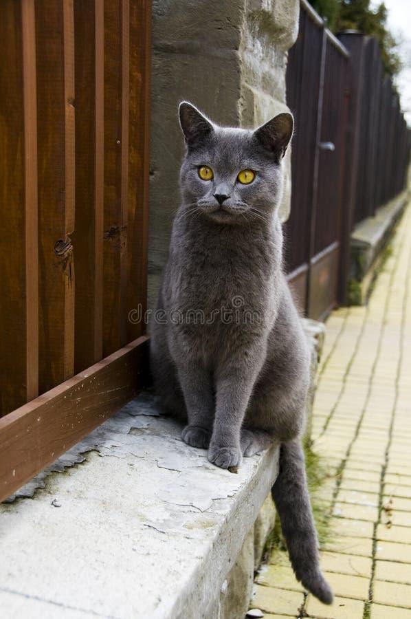 Free Cat Stock Image - 8358071