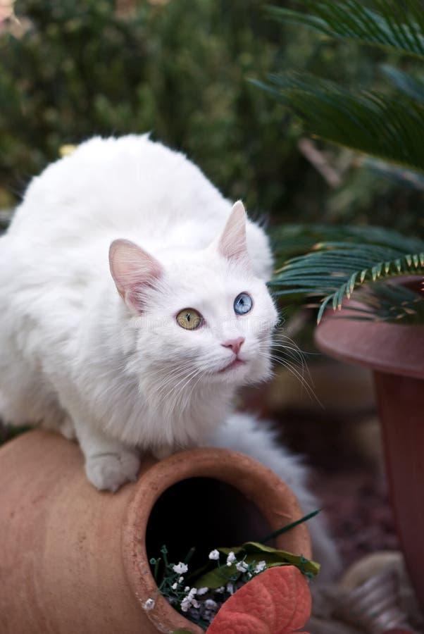 Download Cat stock image. Image of portrait, feline, cute, fuzzy - 8422753