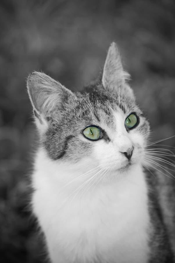 Download Cat stock photo. Image of animal, detail, nose, feline - 9442000