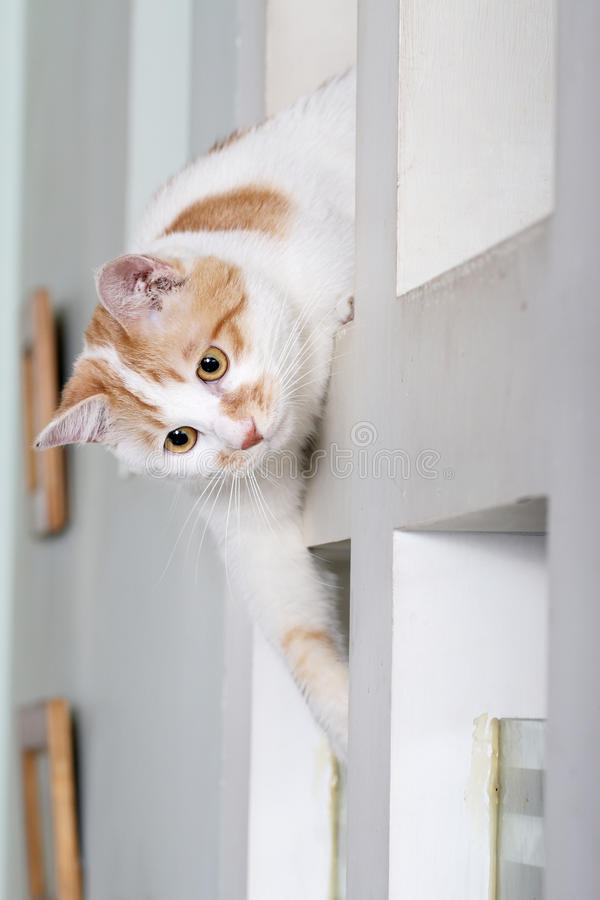 Cat. A very clever little cat. It is watching its partners in the play royalty free stock image