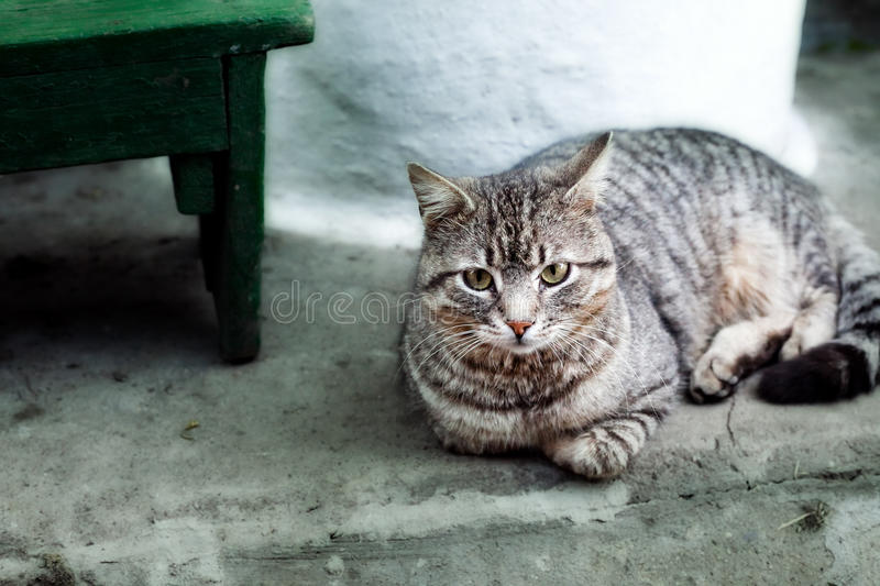 Download Cat stock photo. Image of animal, nobody, outside, adorable - 9954808