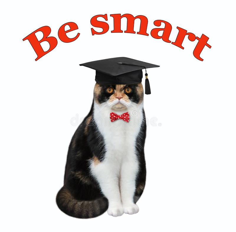 Cat in an academic hat royalty free stock images