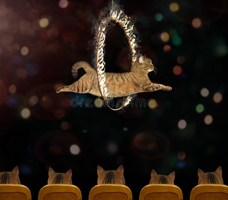 Cat acrobat 2. The cat acrobat is performing a circus act royalty free stock image