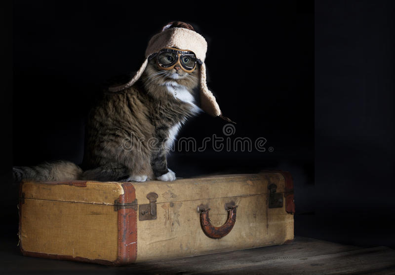Cat Adventurous Traveler. A cat dressed in retro flight cap and goggles sitting on vintage suitcase ready for adventurous travel