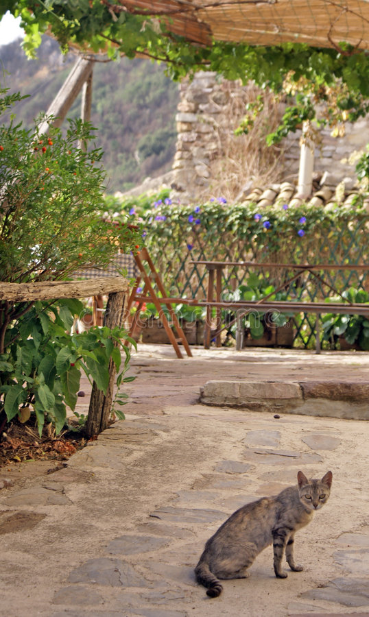 Cat in agriturismo. Cat an agriturismo in the country in marineo near Palermo (Italy royalty free stock photo