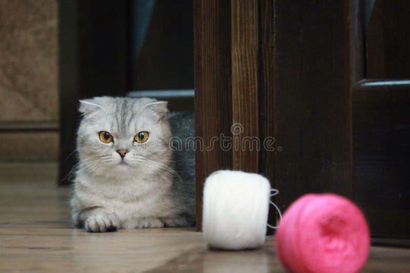 Cat Alice stock illustratie
