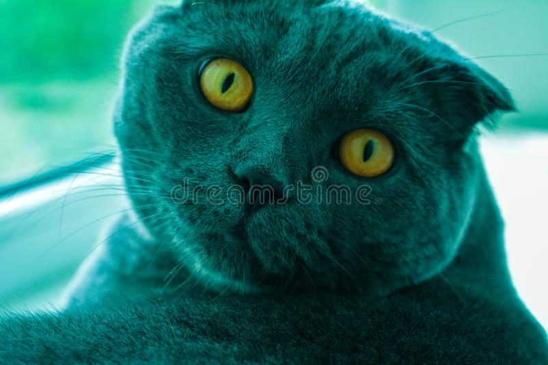 Cat with amber eyes stock photo