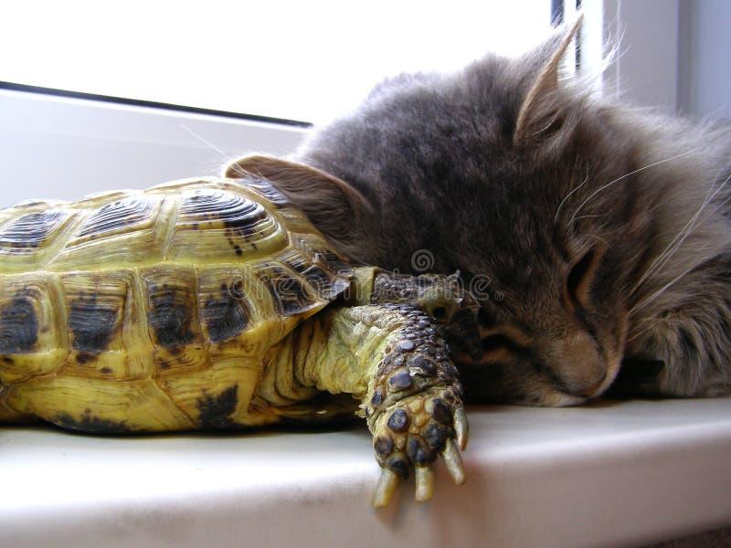 Cat&turtle royalty-vrije stock fotografie