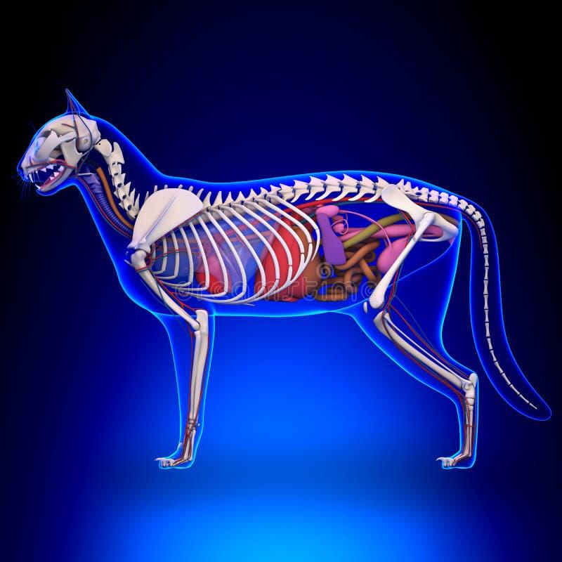Cat Anatomy - anatomie interne d'un chat illustration libre de droits