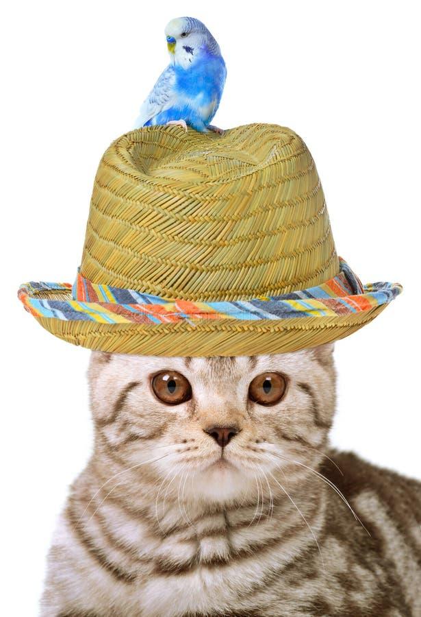 Free Cat And Bird Royalty Free Stock Photos - 22219118