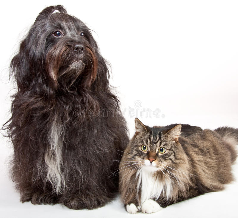 Free Cat And Dog Stock Images - 13541204