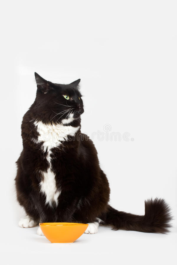 Free Cat And His Food Royalty Free Stock Photos - 30873348