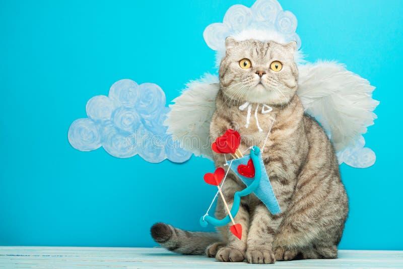 Cat Angel i form av kupidonet, valentin dag fotografering för bildbyråer