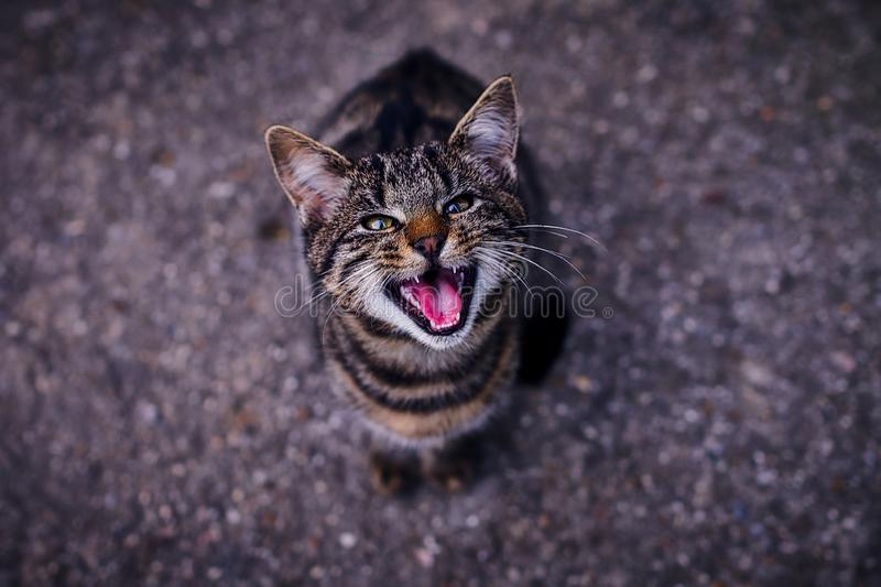 A cat in an angry stituation royalty free stock image