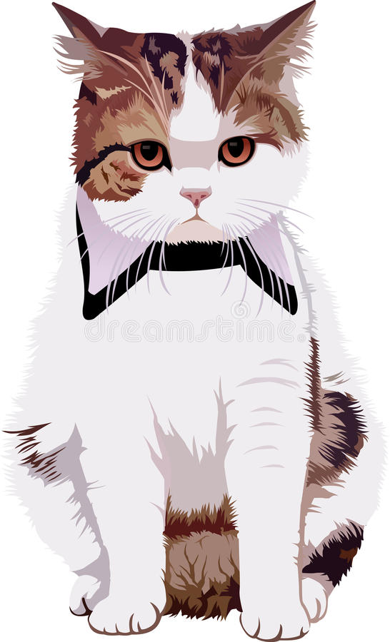 Cat2_animal_pet_full_vector royaltyfri foto