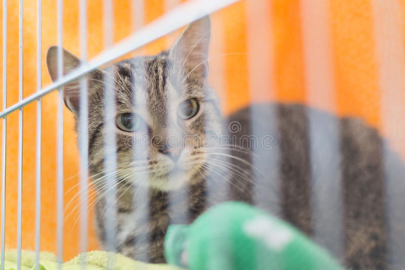Cat in animal pet shelter rescued unwanted lost ready for adoption. Tabby cat in animal pet shelter cage behind bars, rescued for adoption as unwanted lost royalty free stock photography