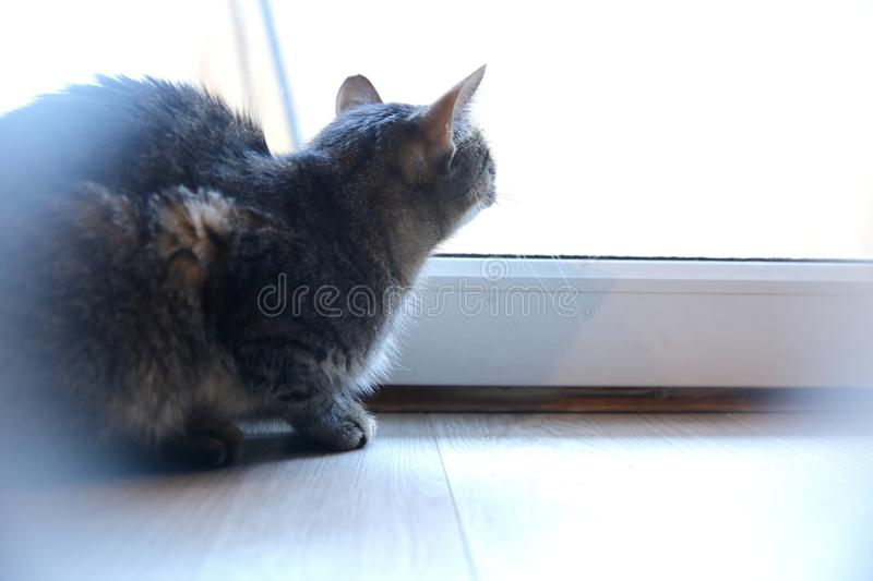 A cat is an animal that always walks its own paths and it does not matter whether it is a pure rooster or an ordinary roofer. Often cats that do not have a royalty free stock image