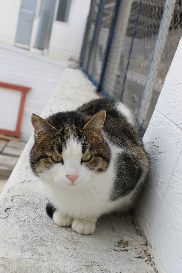 Cat, animals world. Green eyes royalty free stock photos