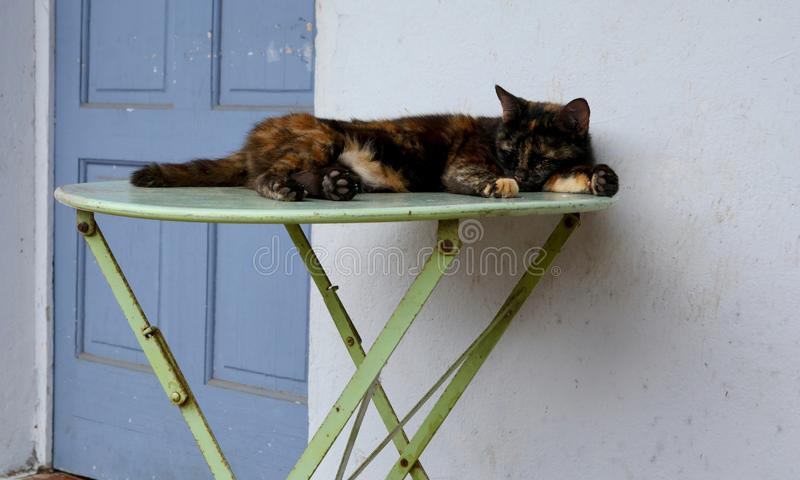 Lazy Day Lounging and Relaxation. Cat as a model of lazy day lounging and relaxation, resting on old vintage table in rustic setting stock photography