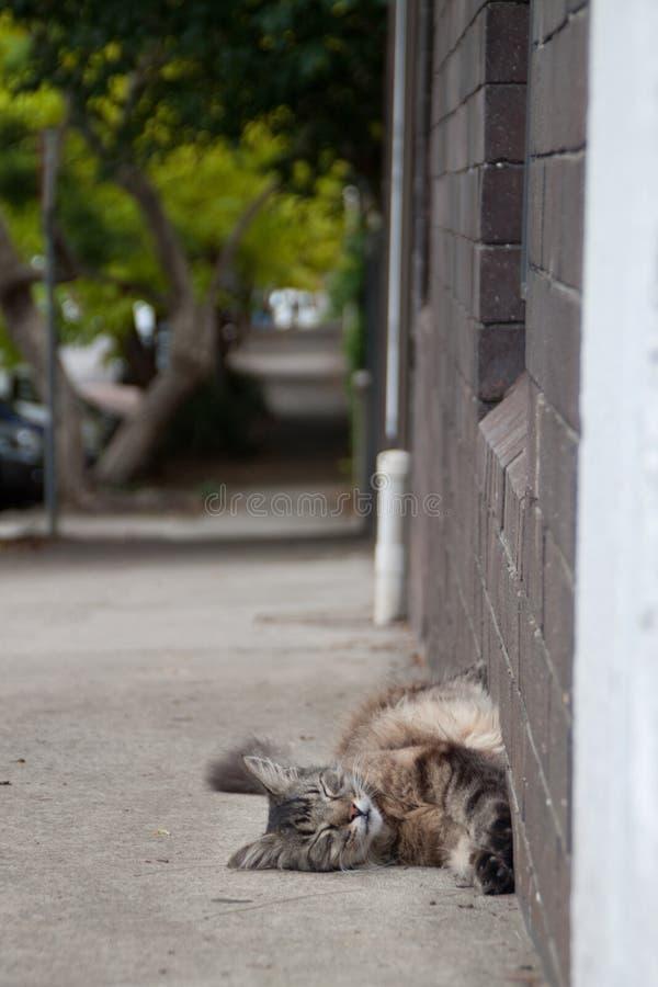 Cat Asleep supérieure photo libre de droits