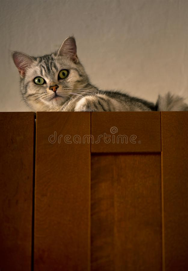 Cat stock photography