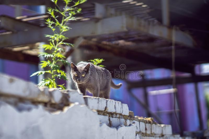 Cat with attentive eyes going along the urban industrial brick wall and carefully looks in our direction. Summer sunny stock image