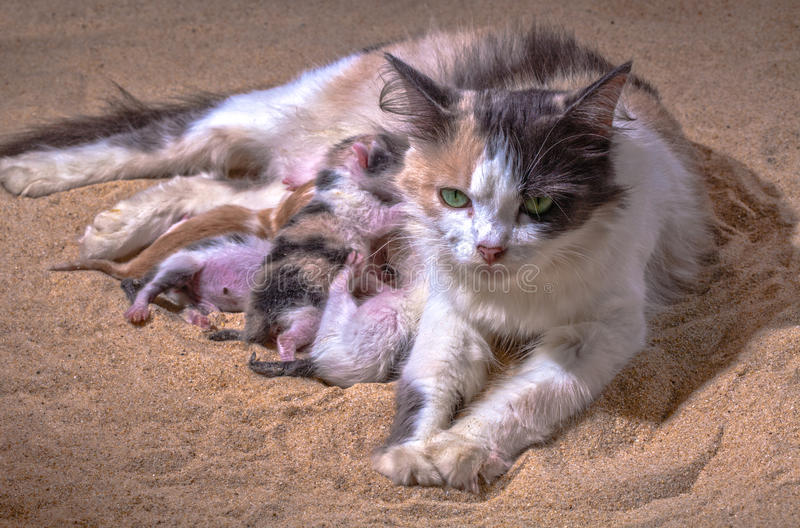 Cat baby in the sand. Mother cat gave birth in the sand stock images