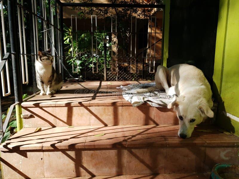 Cat Babysitting a um Cão imagens de stock