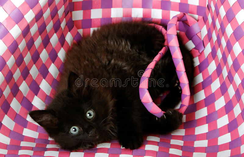 Cat in bag. stock photo