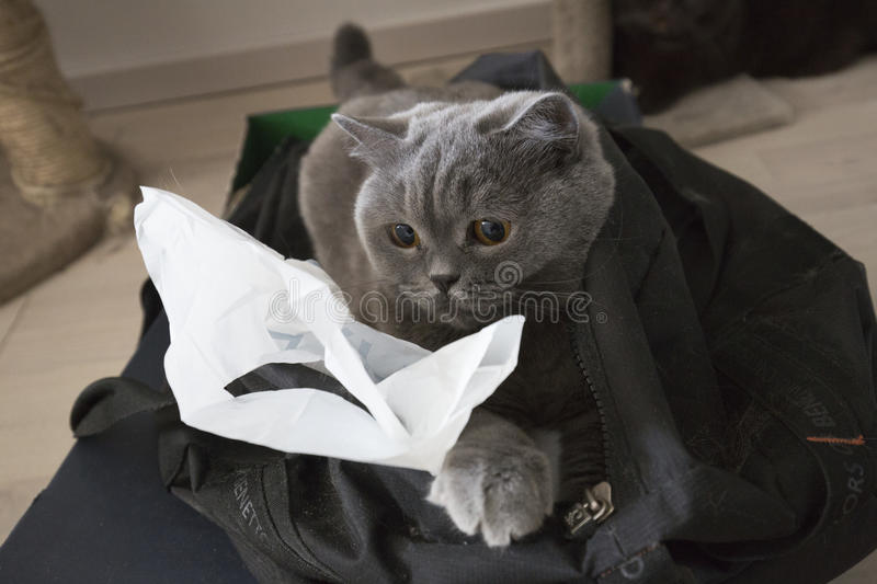 Cat in the bag stock photography