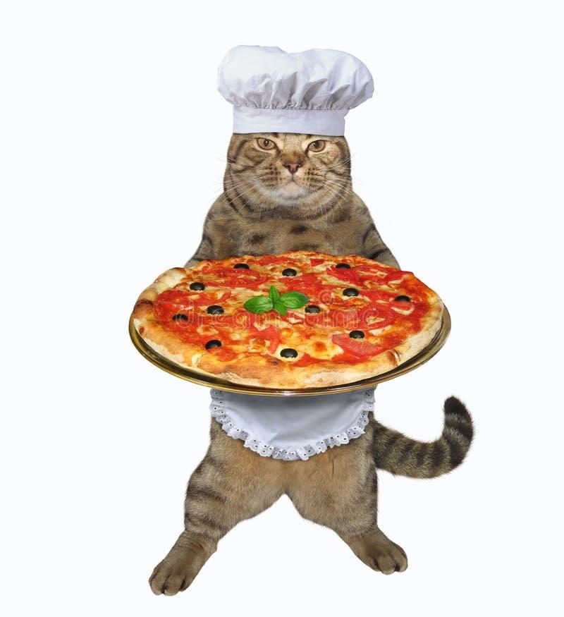 Cat baker holds pizza stock image