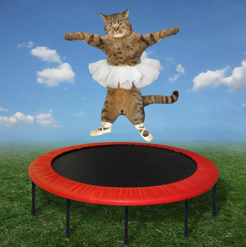Cat ballet dancer on trampoline. The cat ballet dancer in pointe shoes and a white skirt is jumping on a red trampoline in the meadow royalty free stock photography