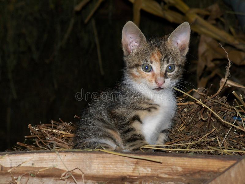 Cat in the barn looking royalty free stock images