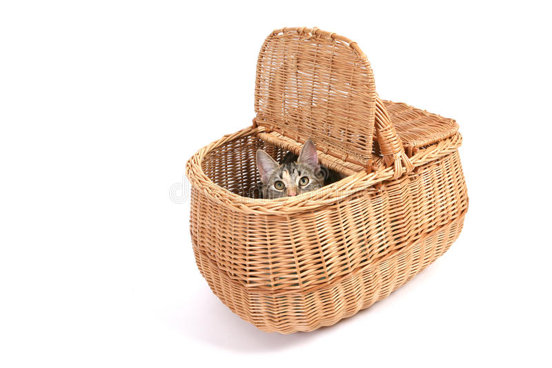 Cat in basket stock photography