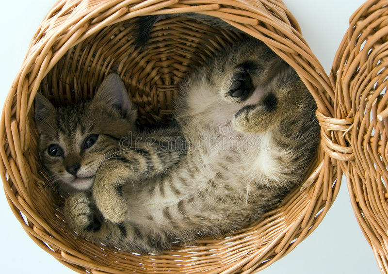 Cat in the basket stock photos