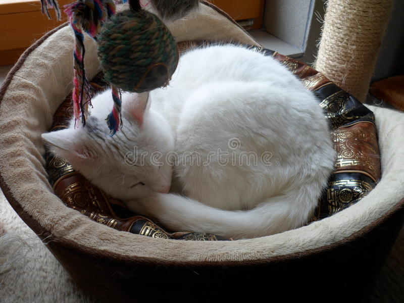 Cat In The Basket Stock Image