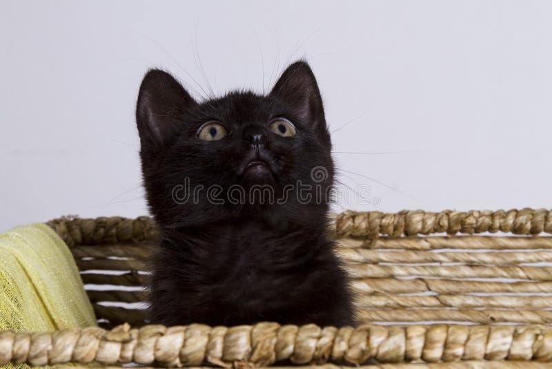 Cat in basket royalty free stock image
