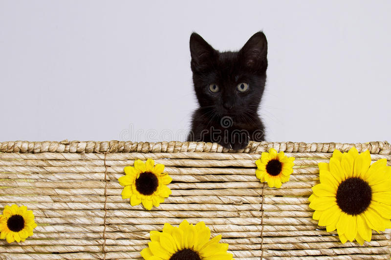 Cat in basket with sunflowers royalty free stock image