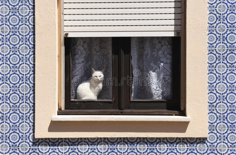 Cat basking in a window in Aveiro,. Portugal stock photo